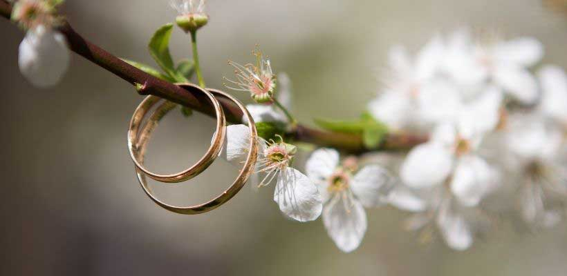 Two rings on a branch with flowers in the background.