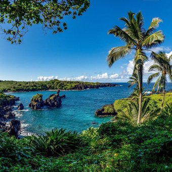 Blue ocean cove with palm trees and green vegetation.