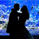 Long Island Bride and Groom Video Thumbnail